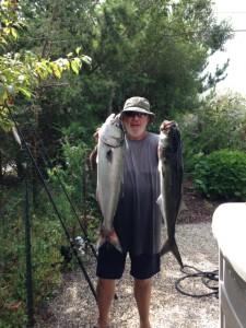 DUELING CHOPPERS: The cure for the bluefish blues.