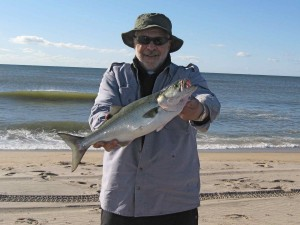 First cast, first fish of 2009. A cocktail bluefish from the Rosh Hoshana Blitz