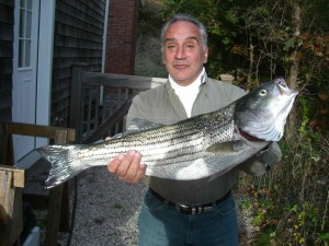 """Tony's keeper was among the many fish the Red Hill Capos scored in two days of """"stupid good"""" surf fishing in Montauk"""